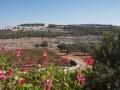 Blick von Cremisan auf Nachbarsiedlung, Foto by Claudia Menzler